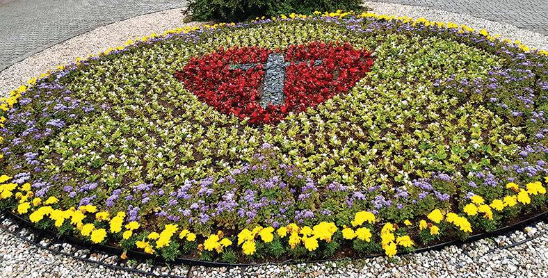 Róża Lutra i szczepienia